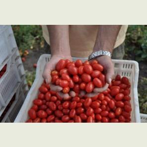 ДОЛЬЧИСИО F1 / DOLCHICIO F1 — томат детерминантный, Esasem