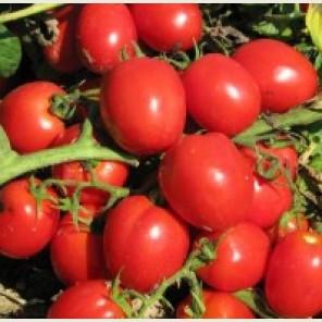 РЕДИ F1 / REDI F1 — томат детерминантный, Esasem