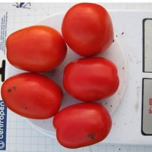ГЕЛЕКСИ F1 / HELEKSI F1  — томат детерминантный, Esasem