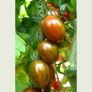КРИСПИНА ПЛЮМ F1 / CRISPINA PLUM F1 - томат индетерминантный, Esasem